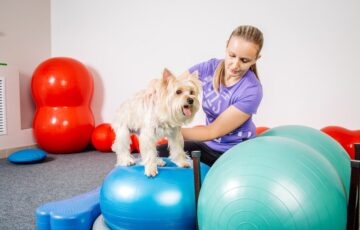 犬の運動不足を解消!バランスボールで効果的に筋肉をつけよう