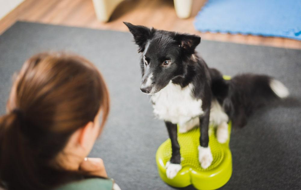 犬用バランスボールの効果は?